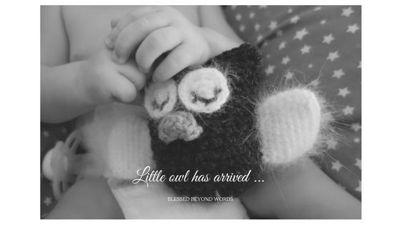 little-owl-is-born